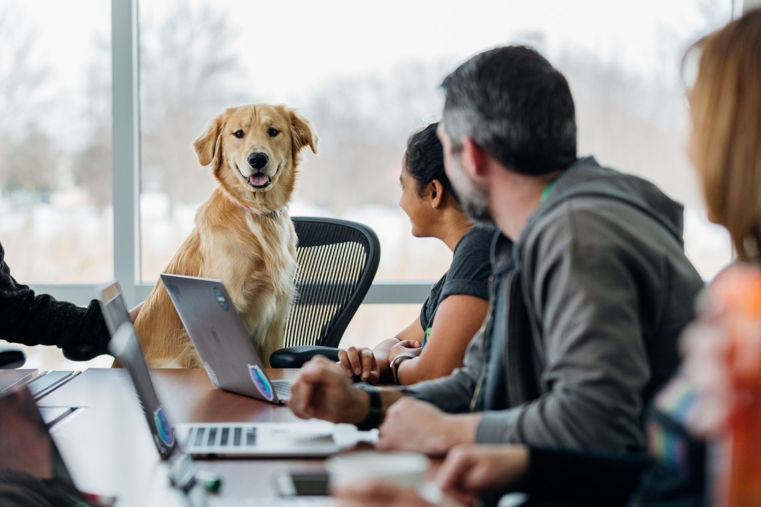 Excellent.org talks about dogs in the office and gives reasons why there should be more four-legged team members, the picture shows a dog on an office chair attending a meeting