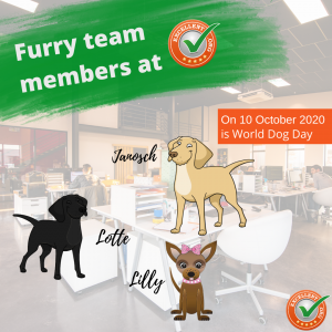 Excellent.org speaks on World Dog Day about the advantages of dogs in the office, the picture shows a graphic with the three office dogs at EXCELLENT.ORG